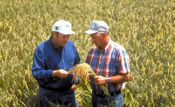 Should You Develop Your New Crop Alone?