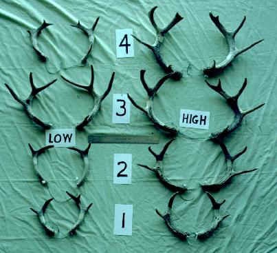 Difference in Antler Growth (Low Proteing vs. High Protein Diet)
