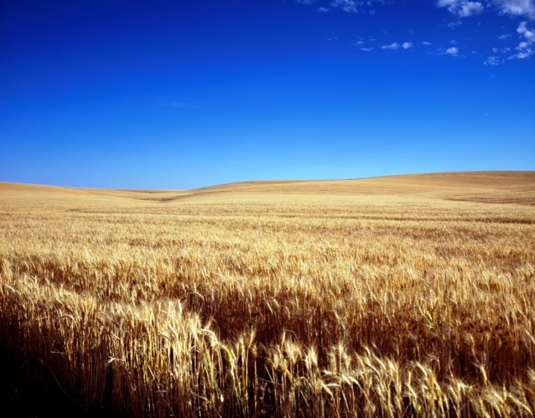 The Fundamental Components for Establishing a Crop Enterprise