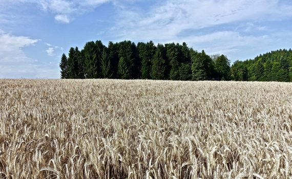Marketing Considerations When Developing a New Crop