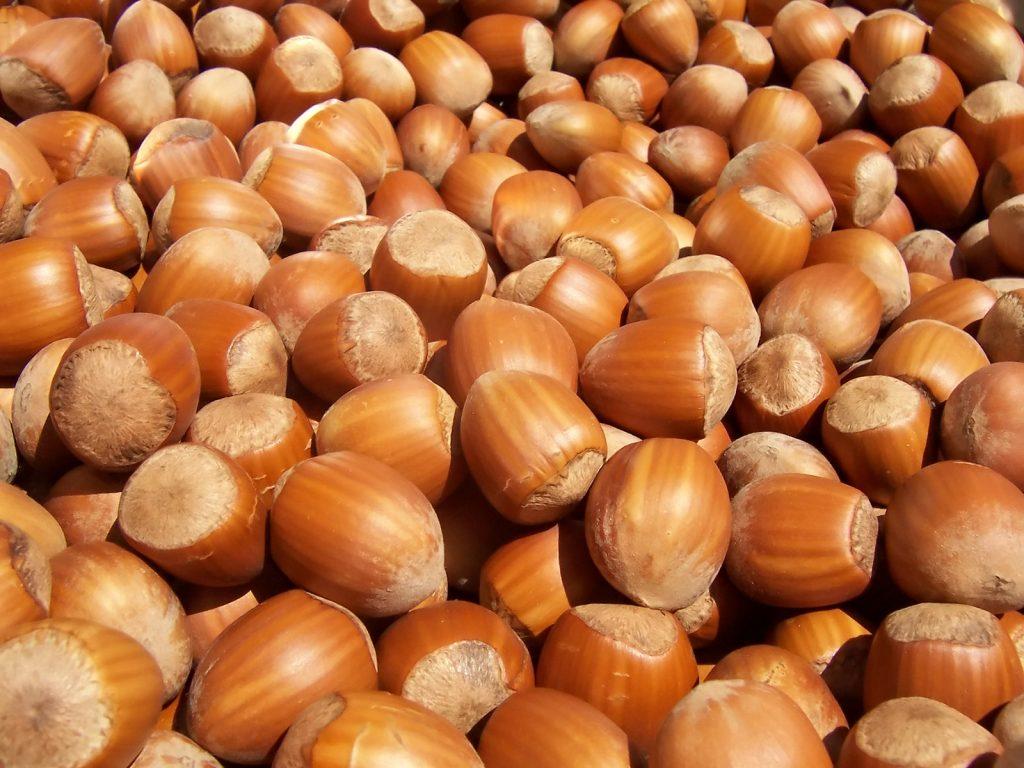 The Very Profitable Business of Hazelnut Farming