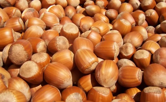 The Very Profitable Business of Hazelnut Farming