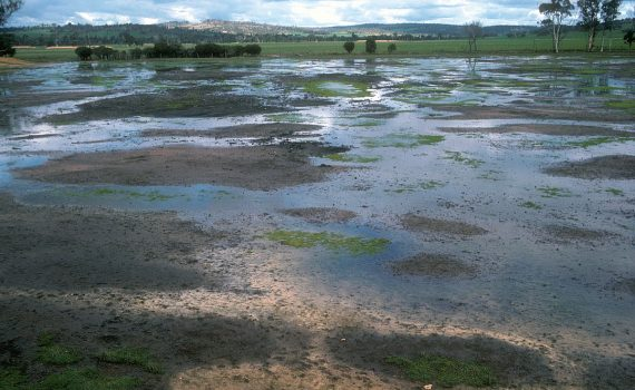 Livestock, Plant and Crop Tolerance to Water & Soil Salinity