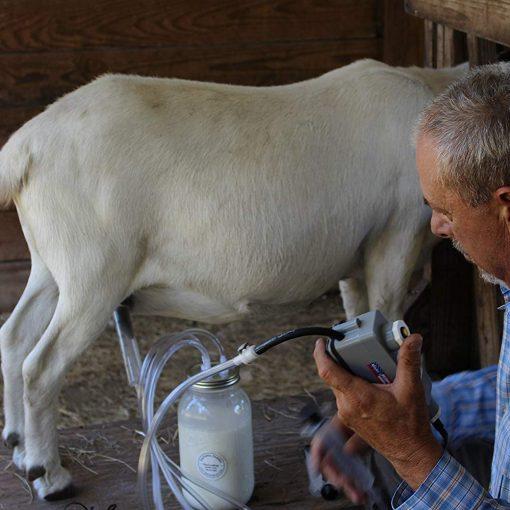 Best Goat Milking Machine (Gentle, Fast Milking)