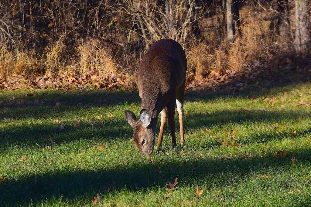 Best Mineral Block for Deer (Antler Growth, Attractant & Health)