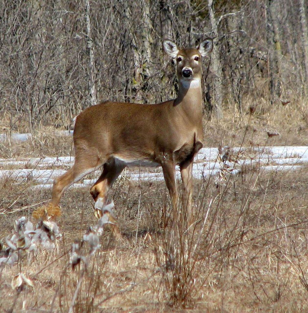 Best Salt Block and Lick for Deer
