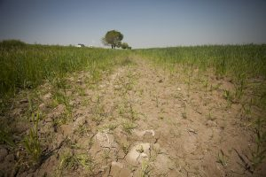Is Salt in My Water Affecting My Farm's Productivity