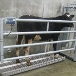 Best Livestock Scales